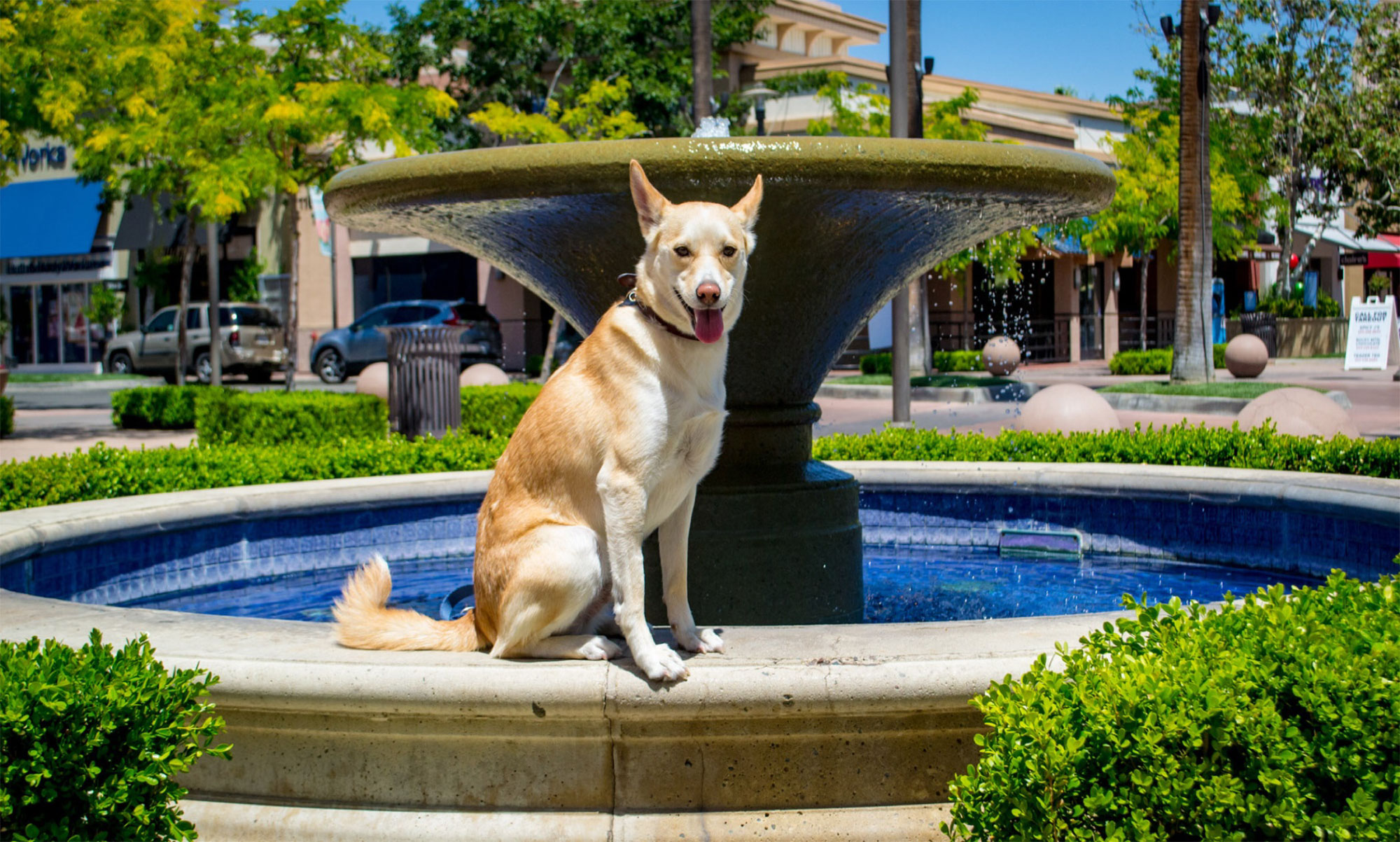 Dog sitting at water fountain